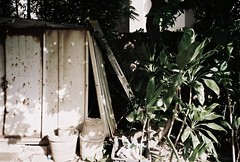 shed (Miroku Bosatsu) Tags: auto plants canon hawaii afternoon shot oahu shed neighborhood shack honolulu sure foilage ti dilapidated supreme makiki autoboy