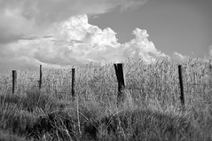 Clture (Olivier-B) Tags: summer blackandwhite bw france clouds fence landscapes noiretblanc nb t nuages paysages clture lozre
