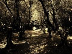 Archery Forest (El Alcalde de l'Antartida) Tags: woods forest wilderness archery target shadows foresta bosco sepia trees bersaglio canonsd880is powershot alberi ulivi toscana firenze arcieri