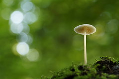 On a hill (Erik0067) Tags: mushroom circle angle bokeh low gill bos gills kralingse kralingsebos