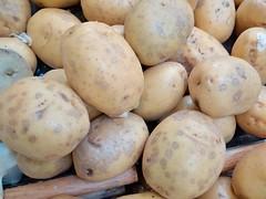 Anglų lietuvių žodynas. Žodis solanum tuberosum reiškia <li>Solanum tuberosum</li> lietuviškai.