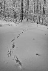 (Djordje Petrovic) Tags: blackandwhite monohrom mountain snow winter tree forest nikond80 tokina1224mm