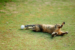 . (rampx) Tags: japan zeiss cat action hiroshima neko   onomichi   zf2 aposonnart2135