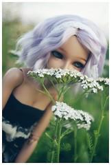 Eloise's little world (tuppi(   ` )) Tags: ball doll bjd fairyland jointed mnf minifee mirwen