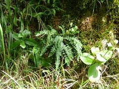 Skocjianske jame (29) (Naturalmentescienza) Tags: grotte jame reka skocjanske timavo sancanziano scanziano