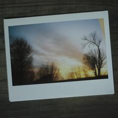 instax (Carlos Donaduzzi) Tags: winter sunset sky sun tree nature fuji natureza cu instant instax instantnea