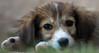 Pupppy Eyes (Bhavishya Goel) Tags: dog puppy greece stray serres puppyeyes cuteeyes lithotopos