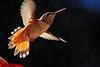 Take Off, 18 August 2014 (Bob Palin) Tags: usa bird birds 1025fav 510fav canon utah wildlife 100v10f hummingbirds torrey potofgold waynecounty hummers 100vistas instantfave canonef70300mmf456isusm canoneos60d eos60d orig:file=2014081820885adjust2048