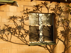 Distinctive Shadows (mikecogh) Tags: shadow wall frangipani elegant delicate screens plympton distinctive
