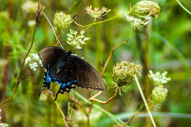 Shakamak State Park - August 12, 2014