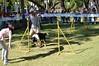 DSC_0115 (Clube de Cãompo Hotel Fazenda para Cães) Tags: agility jundiaí estimacão clubedecãompo clubedecãompohotelfazendaparacães hotelfazendaparacãesituclubedecãompo