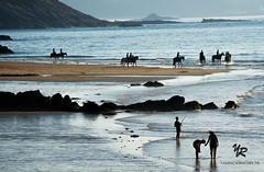 Horses, Brittany - FRANCE (Yannick-R) Tags: sunset horses people horse france beach nature landscape britanny yannick rivoire brittanyfrance