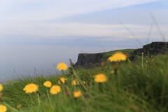 another view - Cliffs of Moher (Kathrin Schild) Tags: ireland summer vacation green june juni europa cloudy sommer urlaub irland grn cliffsofmoher moher 2014 erholung schn bewlkt erlebnis mustseen
