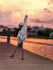 Heron Night Out (bmc464) Tags: ocean blue sunset sea beach heron water tampa bay key florida siesta longboat sarasota lido