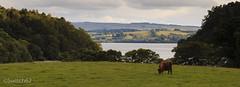 IMG_3182 (Switch62) Tags: bay scotland loch lomond millarochy 2014schotland