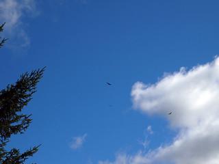 heavy air traffic (2)