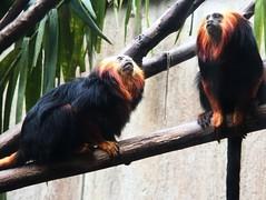 Image36 - Copia (Daniel.N.Jr) Tags: animal selvagem zoologico kodakz990