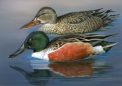 2014 Federal Duck Stamp Art Contest Entry 128 (USFWS Headquarters) Tags: art duck conservation stamp wetlands waterfowl