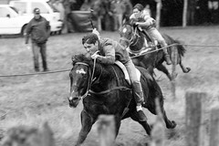 Carrera a la chilena (Mauricio Morata A.) Tags: chile patagonia caballos aysn carreraalachilena