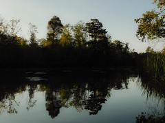 Byrne's Lake, Alabama (Shane Adams Photography) Tags: trees alabama swamp wetlands cypress baldwincounty ilobsterit byrneslake