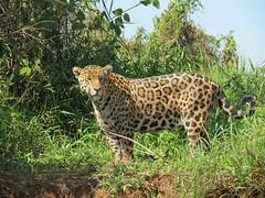 Pantanal, Brazil (Marc_P98) Tags: