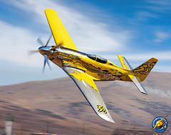 Precious Metal P-51 Mustang Painting 2014, by Ron Cole (ColesAircraft) Tags: art race painting print cole aviation air nevada ron reno griffon p51 2014 airraces preciousmetal thomrichard mestang