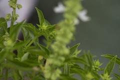 Planos Vegetales (Jos Ramn de Lothlrien) Tags: flores luz reja flor jr oasis esperanza planos producciones profundidad florear colorenlaobscuridad alambradacontraste