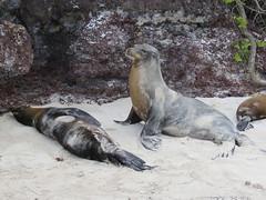 Galapagos - San Cristobal-144