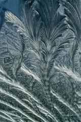 20140119-DSC_0032 (shmikov) Tags: frostwork