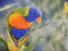 """Rainbow in the Magnolia"" by Barbara Newton (Barb & Jo) Tags: birds lorikeets australianbirds rainbowlorikeets howtooilpaint howtopaintbirds birdpaintings"