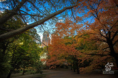 Central Park NYC Fall 2016