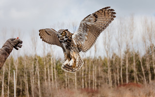 Canadian Raptor Conservancy - March 4, 2017