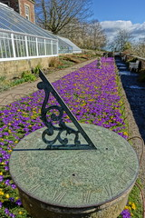 Conservatory flower bed and sundial (Sparky the Neon Cat) Tags: europe united kingdom uk great britain gb england northumberland wallington walled garden crocus purple ruby giant flower sundial bed conservatory yellow aconite