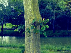 In the middle of the river (G.F.S) Tags: trees naturaleza france green nature colors river canal couleurs vert du rivire colores toulouse midi hautegaronne midipyrnnes