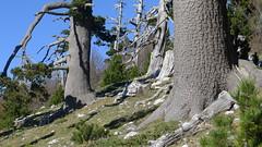 Serra di Crispo