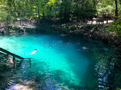 Madison Blue Spring (floridahikes) Tags: statepark rural swimming outdoors florida parks springs madisonbluespring