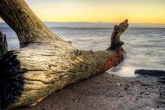 Drifter (eCHstigma) Tags: california sunset seascape water 35mm landscape bay sundown sony voigtlander fremont bayarea lowtide a7 voigtlandernokton35mmf14mc sonya7
