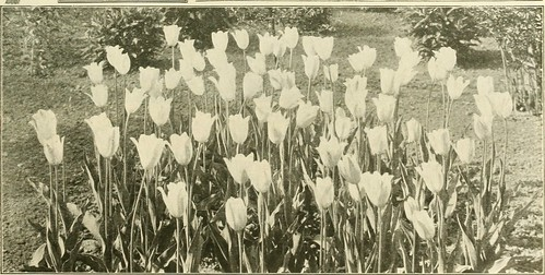 """Image from page 18 of """"Farquhar's autumn catalogue : 1911"""" (1911)"""