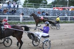 IMG_9304 (milespostema) Tags: county celebrity race big fair rapids harness mecosta