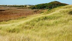 Head of the Meadow (mahler9) Tags: autumn field grass october capecod massachusetts hill truro 2014 jaym northtruro headofthemeadow mahler9
