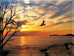 ☀Una serata speciale... (antonè) Tags: sardegna sea sky italy sun bird tramonto nuvole mare sardinia fourseasons cielo sole alghero capocaccia photoroom royalgroup antonè weloveart angolidisardegna