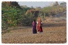 In the Middle of No Where (The Spirit of the World) Tags: india rural walking landscape locals pali indianwomen ruralindia thegalaxy dailylives