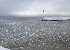 2014-01-25 14.05.05 (gordandlee) Tags: lake ice thebeach 2014