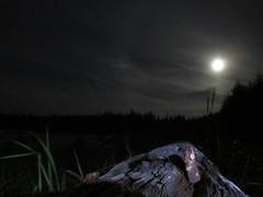 Super moon (kootenayskid) Tags: light sky moon night halo full malcolmisland moonring auora