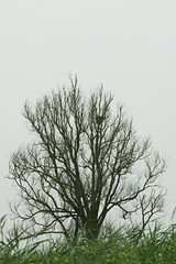 DSC06440 (Ton Smilde) Tags: oostvaardersplassen naturereserveinthenetherlands