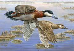 2014 Federal Duck Stamp Art Contest Entry 91 (USFWS Headquarters) Tags: art duck conservation stamp wetlands waterfowl