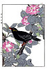 Sasanqua camellia and common hill myna (Japanese Flower and Bird Art) Tags: flower bird art japan japanese book hill picture camellia sasanqua common woodblock nihonga religiosa myna imao theaceae keinen sturnidae gracula readercollection