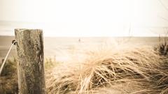 windy New Zealand (Conny Spandl) Tags: new west beach lumix coast windy g5 zealand pancake 20mm neuseeland