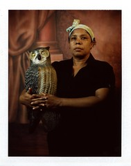 Our new pet (Giovanni Savino Photography) Tags: portrait orange pet color portraiture owl studioportrait 4x5camera instantfilm magneticart fujifilmc100 ©giovannisavino