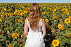 Sunflowers (seryani) Tags: flowers summer people españa woman naturaleza flores flower color colour nature canon outdoors person persona mujer spain women europa europe outdoor flor august personas agosto amarillo sunflowers sunflower verano campo prado yani mujeres girasol palencia yanina airelibre girasoles campodegirasoles canoneos5dmarkii canonef1635f28lii canonef1635 5dmarkii summer2014 verano2014 august2014 yaninapaolagarcíamiranda agosto2014